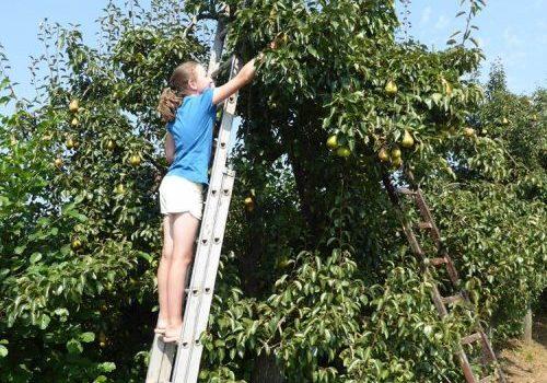 Burgerwindcoöperatie plant extra bomen langs A15 voor Betuwewind-leden