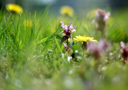 21 april Themabijeenkomst Natuur, landschap en de energietransitie